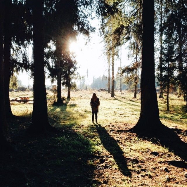 Silhouette of a woman standing between trees in a field