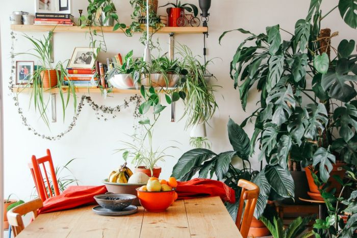 Gorgeous kitchen with a wooden table and bright red chairs surrounded by indoor plants