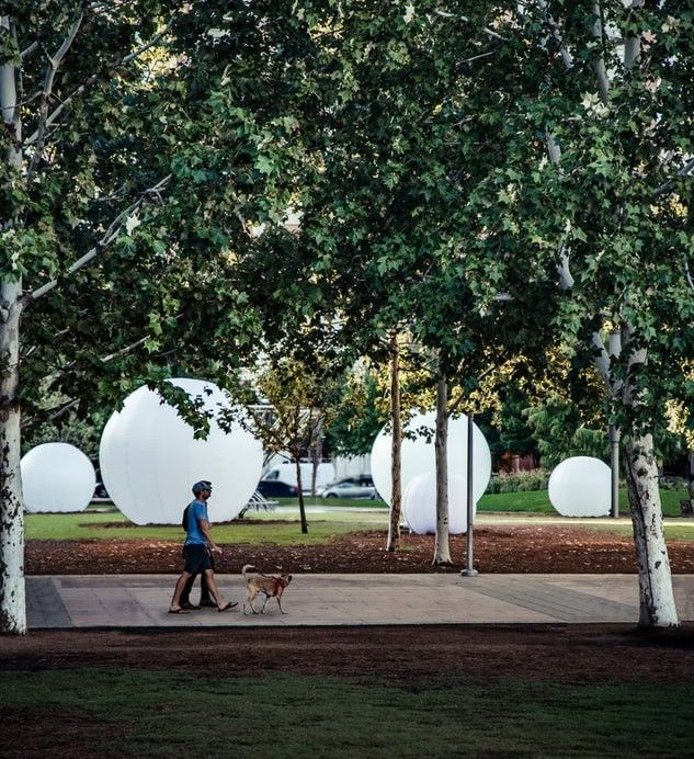 Man walking his dog in an urban park where an art exhibit is displayed